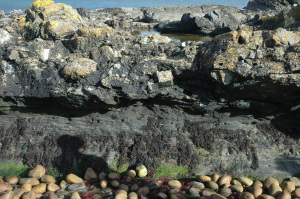 Fine, black shale ready to boil for oil; and just above: A hodgepodge - or haggis? - of big Devonian Flagstone Boulders.