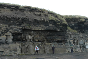 Dark shale that once made oil, and lighter grey sandstone. South Head near Wick, Scotland.