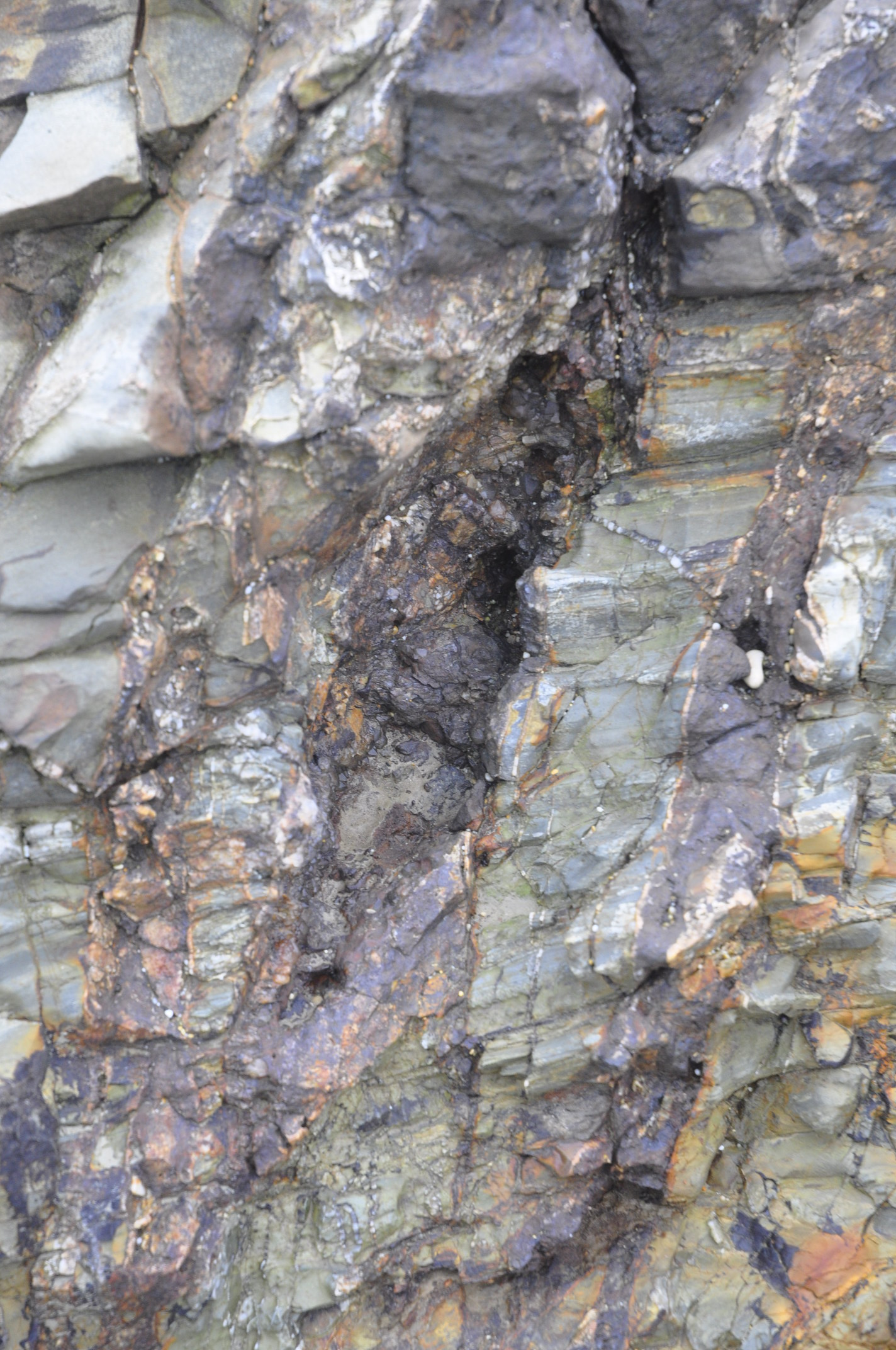 Close-up of the fault zone, with almost black, crushed fault rocks and the fractures around stained brown by minerals precipitated from circulating water.